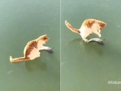 小橘貓冰上弄獅抓嘸魚 滿頭問號