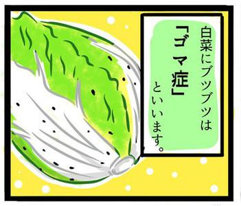 白菜長黑點「不是被蟲咬」 有洞才是抗壓力證明 要滿懷感激吃乾淨