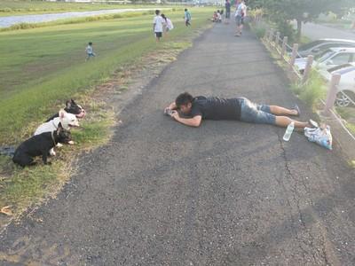 3法鬥排排坐 攝影師趴地猛拍