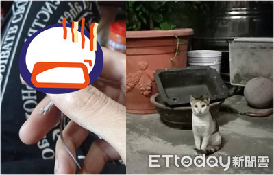 愛貓叼戰利品 奴崩潰:牠還活的