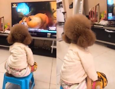 毛毛背影穿睡衣!坐著看電視卡通