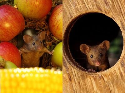 藝術家的庭院遭鼠軍入侵!善良的他「蓋座袖珍鼠村莊」留牠們住下來
