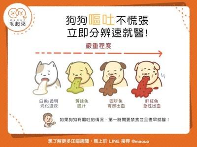 狗狗吐了怎麼辦?從「4顏色嘔吐物」判斷...紅色讓人超心疼