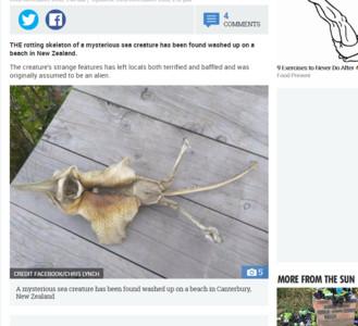「超怪遺骸」現蹤紐西蘭 有細腳+翅膀!