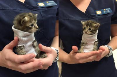 奶貓躲過颶風發抖穿「襪子毛衣」