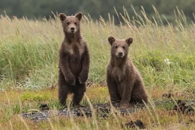 各國趕熊方式 跪求芬蘭熊陰影面積