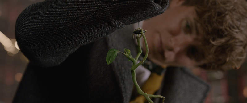 大檸檬用圖(圖/電影《怪獸與葛林戴華德的罪行》劇照截圖)
