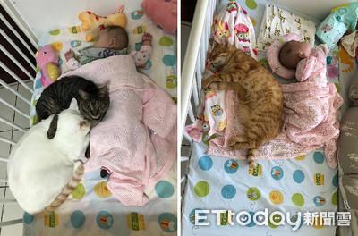 3貓饋修陪寶寶睡 肉身壓被超貼心