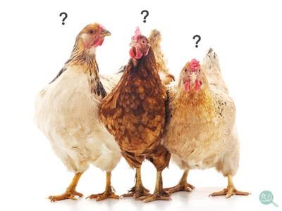 雞精比雞肉營養、誰不適合喝雞精?