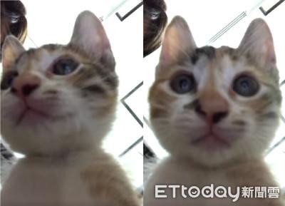 送養直播自己PO!萌貓喬鏡頭自拍