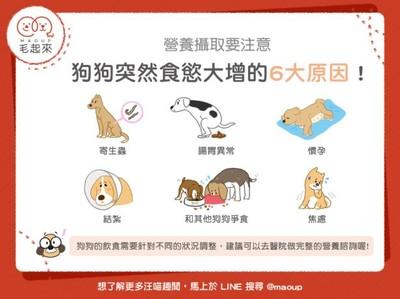 狗狗食慾爆增的6個關鍵原因揭曉!