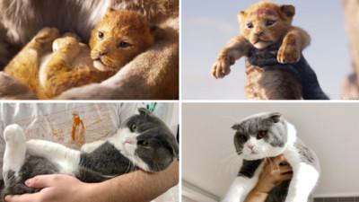 《獅子王》VS《貓子王》經典舉高高模仿大賽!喵皇生無可戀:玩夠沒