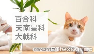 知識片/9種對貓常見有毒植物!
