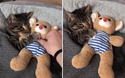 小萌貓睡不著 見它甜笑入夢鄉