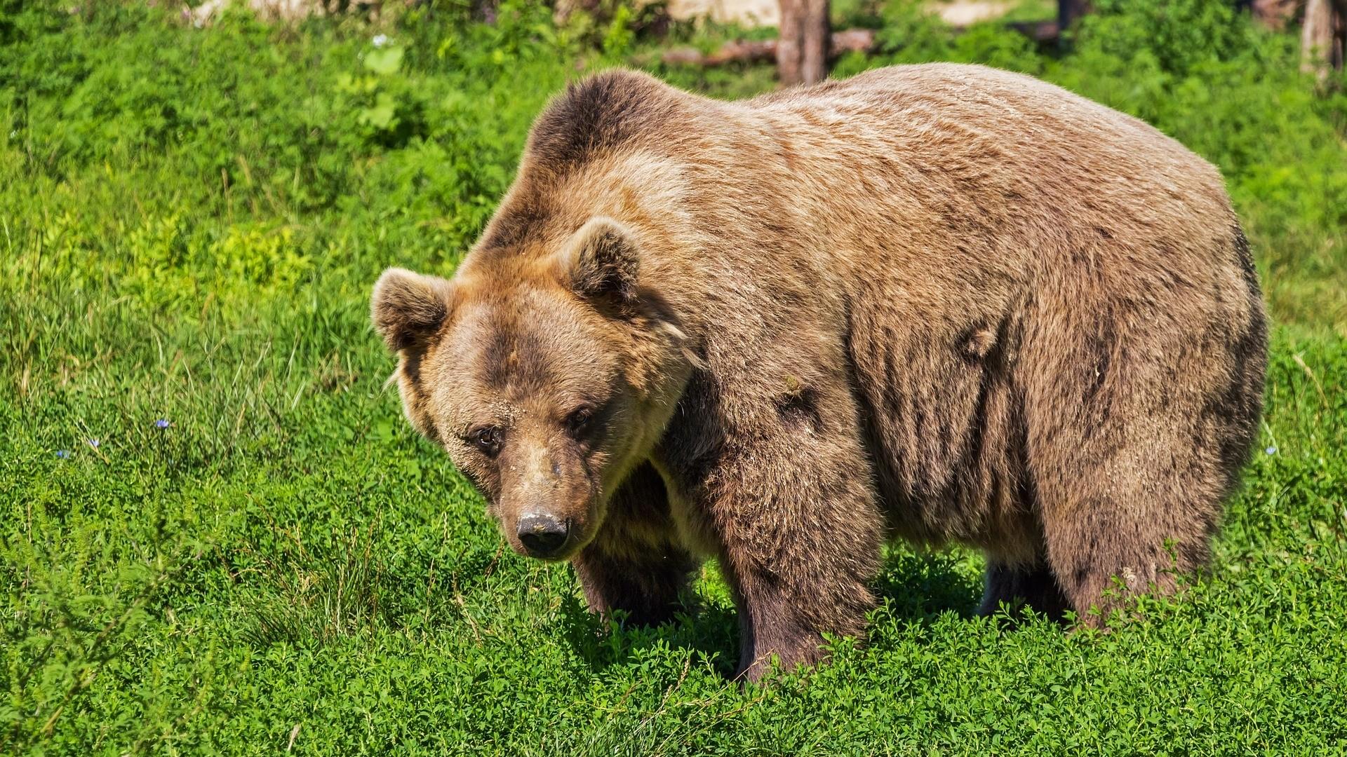 ▲熊 。(圖/取自免費圖庫pixabay)