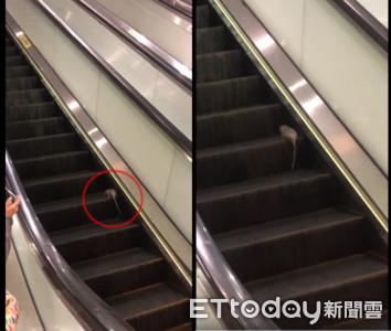 老鼠闖捷運手扶梯!狂奔10秒還停在原地