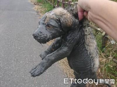 6幼汪遭棄掉水溝 爛泥淹沒身體