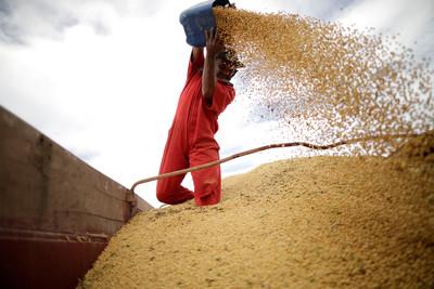 美中緊張 彭博:中國再停購美國大豆