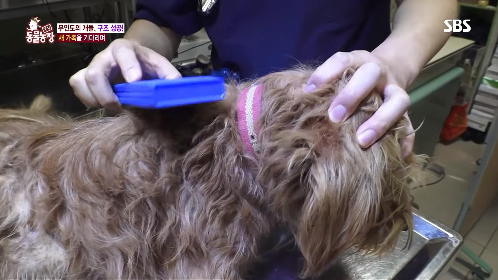 ▲▼南韓統營2隻狗被拋棄在無人島(圖/翻攝自Youtube@SBS Culture)