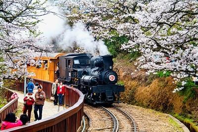 阿里山櫻花季9日開跑