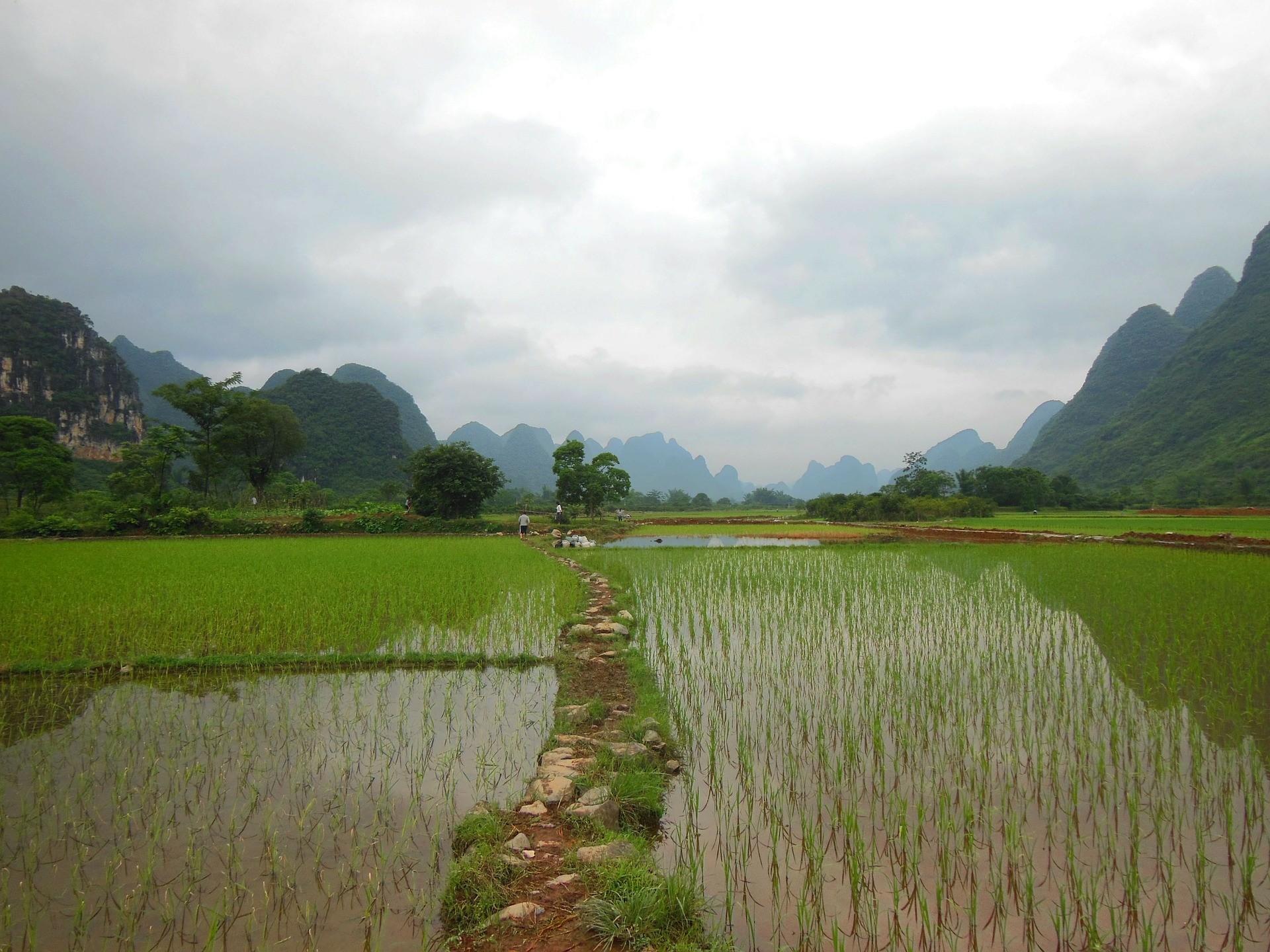 ▲農田 。(圖/取自免費圖庫pixabay)
