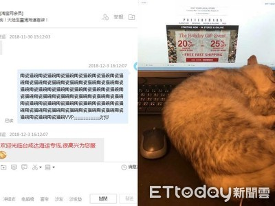 鍵盤喵私訊淘寶37次「陶瓷貓碗」