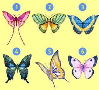 哪隻蝴蝶吸引你?一張圖曝隱藏個性