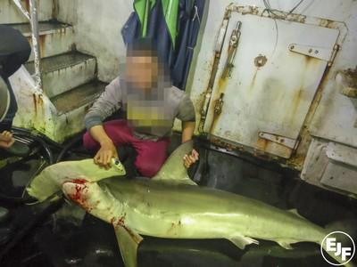 如果鯊魚消失在世界上會怎樣?
