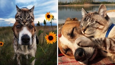 同樣來自寒冷街頭!「一貓一狗」成為摯友 依偎上山下海擄獲百萬粉