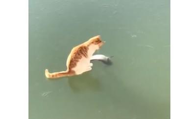小貓想從結冰湖抓魚 網:太萌了