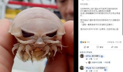 外星人?漁民捕獲「大王具足蟲」