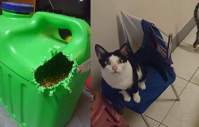 吃貨貓自備開罐器 飼料桶咬開花