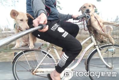 腳踏車帶2汪跑步 結局累壞飼主