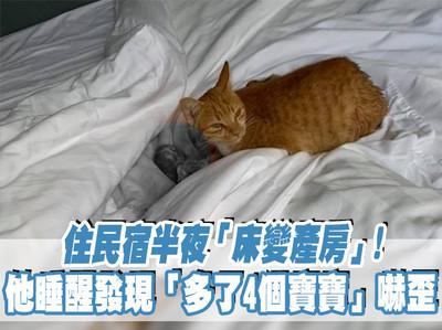 貓媽半夜床上生小孩 他睡醒嚇壞!