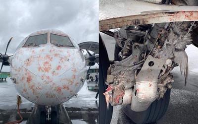 客機遇鳥襲浴血降落 卡滿屍塊如絞肉