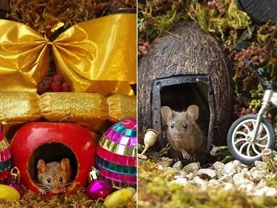 自家後院發現家鼠「狐獴式探頭」 攝影師愛心噴發打造微型村莊