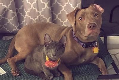 她開車10小時 只為帶一隻盲貓回家