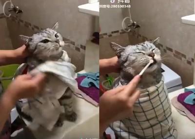 阿嬤幫貓孫睡前刷牙牙、洗腳腳!
