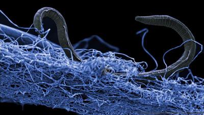 70%微生物在地底 靠礦物生存