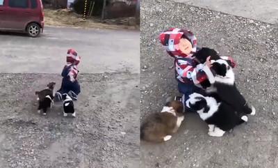 萌娃走路摔倒 小奶狗衝上前包圍