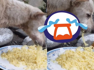 流浪狗慘被割喉!吃麵條「吞入秒滑出」