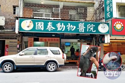 東區國泰動物醫院 遭爆超抽血犬牟利