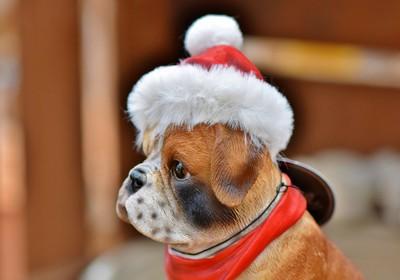 德國收容所聖誕節前禁止領養毛孩