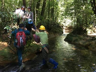 清大「植物獵人」越南發現蕨類新物種