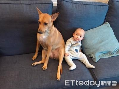 教育部認證:養寵物提升嬰兒免疫力