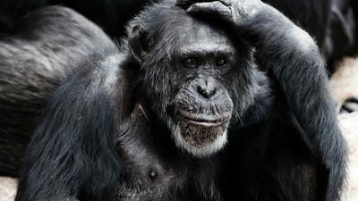 生存不是只有交配!「一夫一妻」才有演化優勢…但不妨礙偶爾偷吃