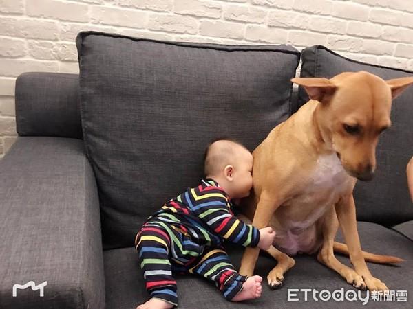 6個月小主人學會「吸狗」 貼心汪姐乖坐「提供香味」