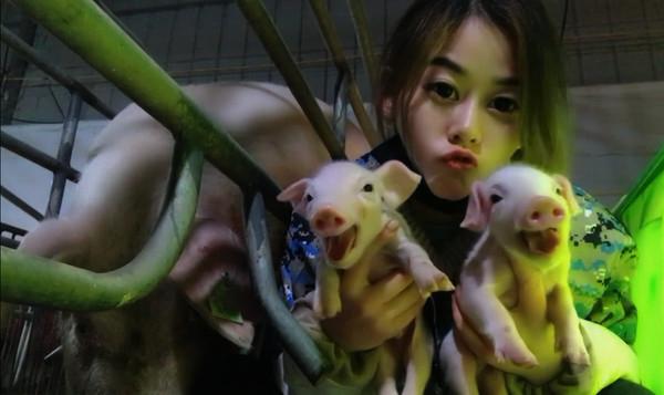 影/27歲氣質妹「陪豬睡」年收455萬!人工呼吸救活400頭豬