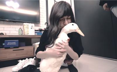 愛鴨變烤鴨 本本吃「小棉花」爆哭