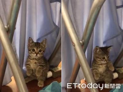 偷抓衣被發現「狐獴貓」心虛裝忙